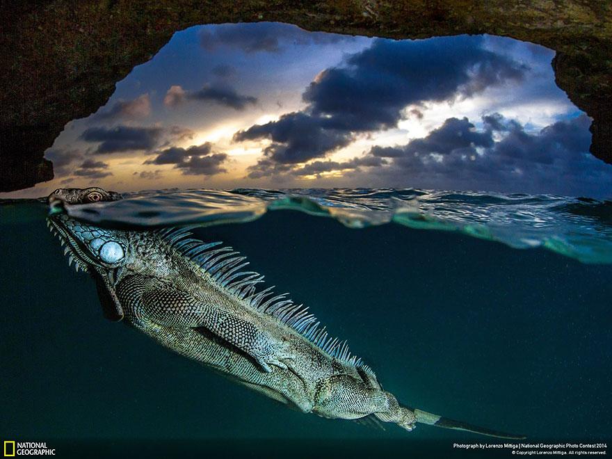 national-geographic-photo-contest-2014-foto-natura-concorso-08
