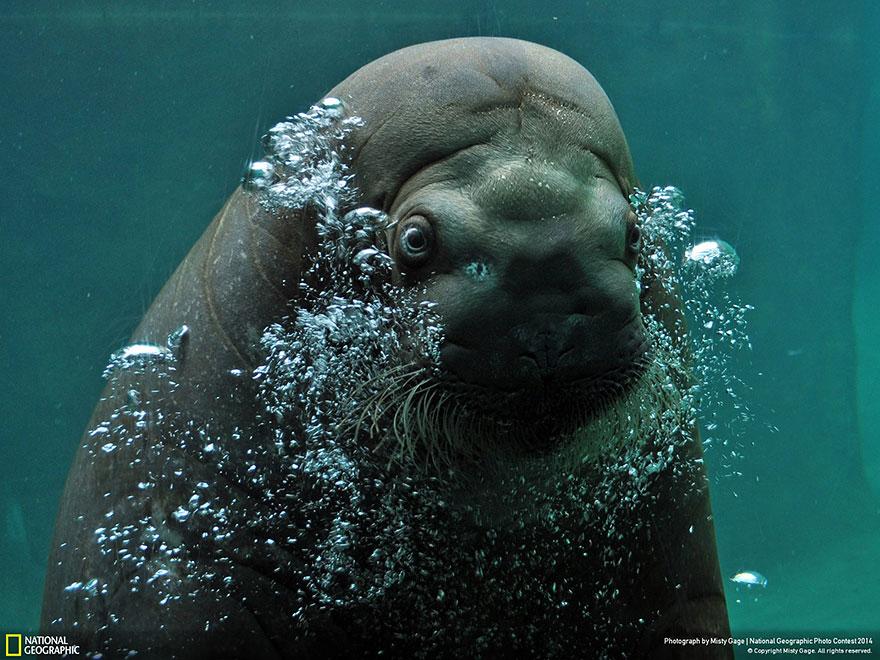 national-geographic-photo-contest-2014-foto-natura-concorso-10