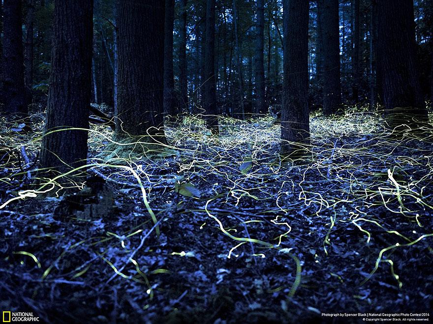 national-geographic-photo-contest-2014-foto-natura-concorso-12