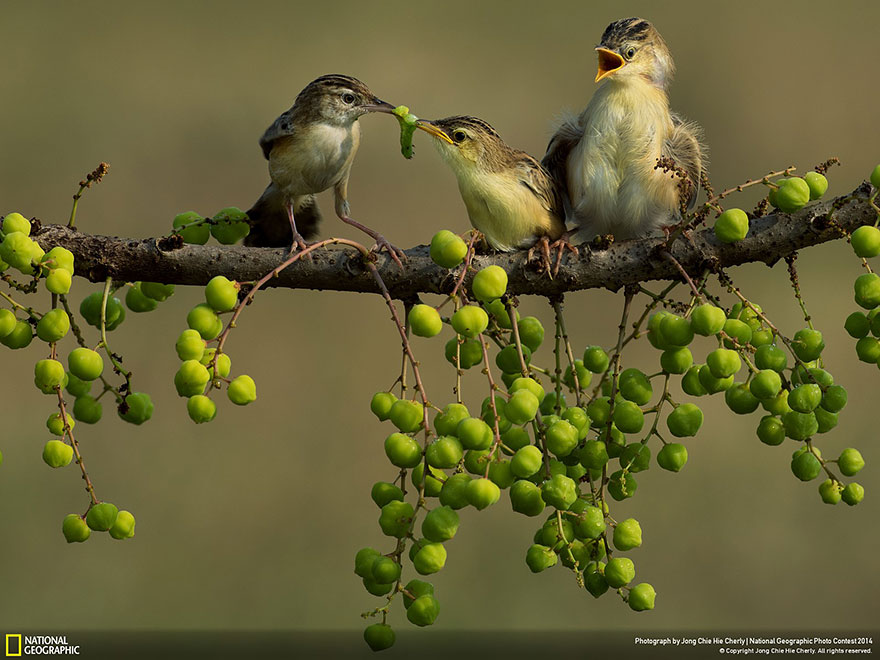 national-geographic-photo-contest-2014-foto-natura-concorso-14