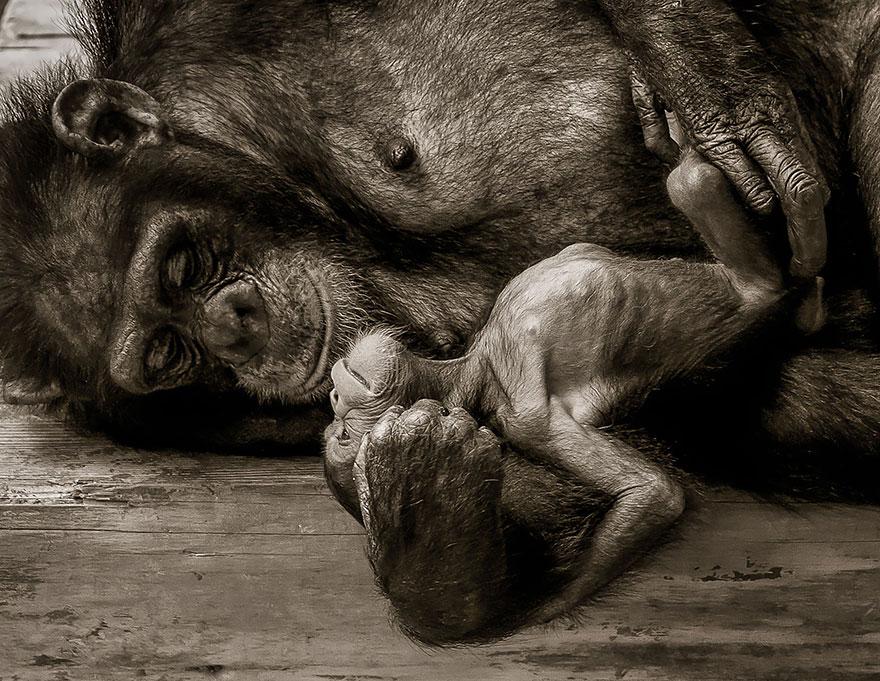ritratti-foto-famiglia-animali-06