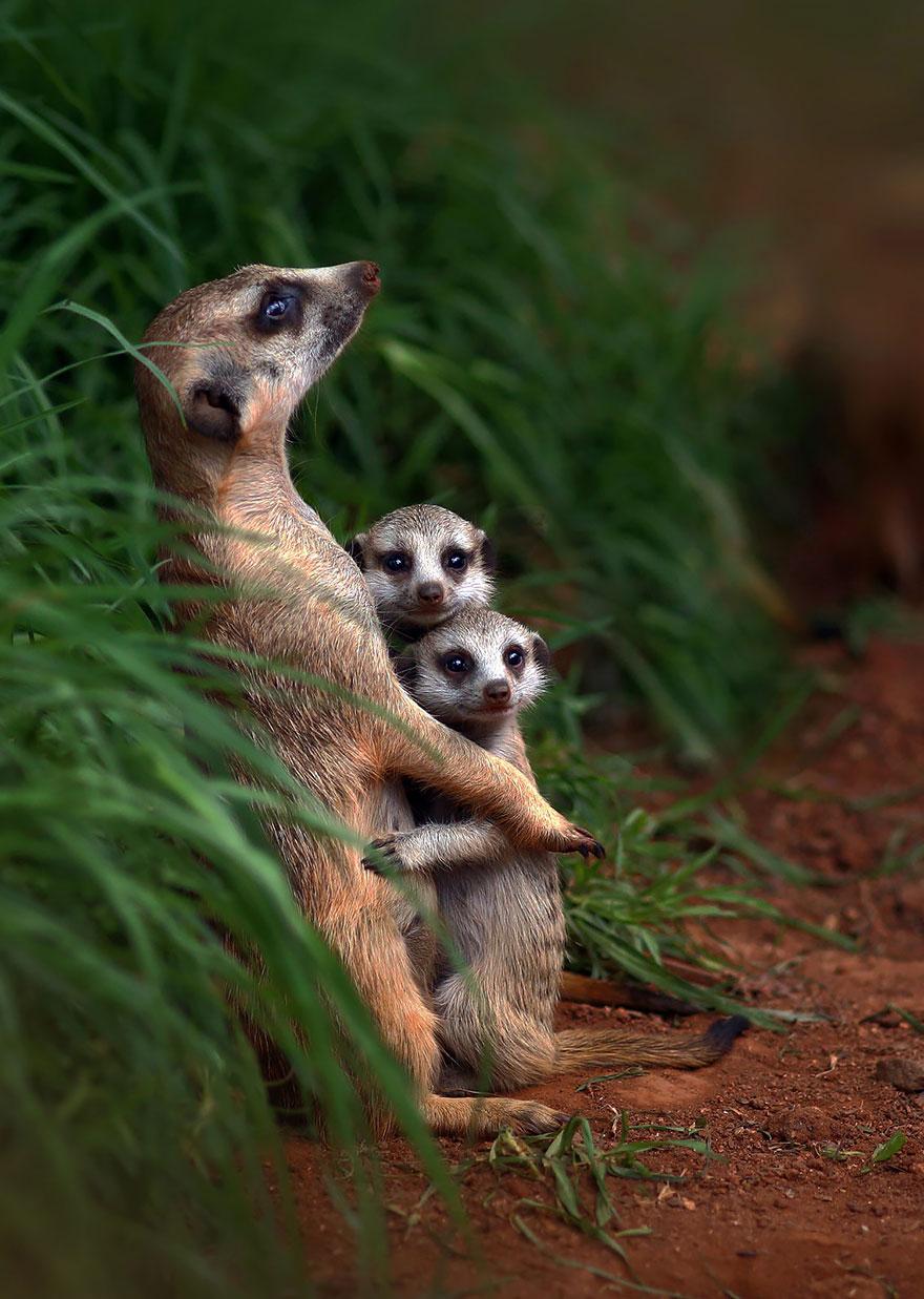 ritratti-foto-famiglia-animali-07