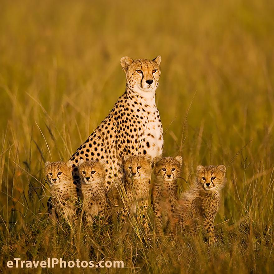 ritratti-foto-famiglia-animali-09