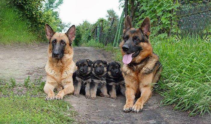 ritratti-foto-famiglia-animali-13
