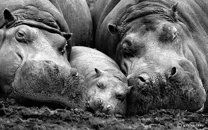 ritratti-foto-famiglia-animali-16