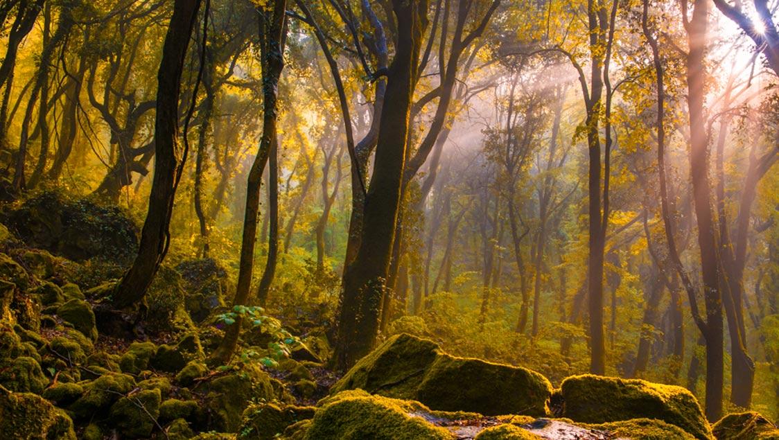 20-luoghi-incantati-da-favola-in-italia-bosco-di-sasseto-01