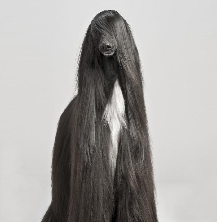 animali-peli-peluria-pelliccia-straordinari-07