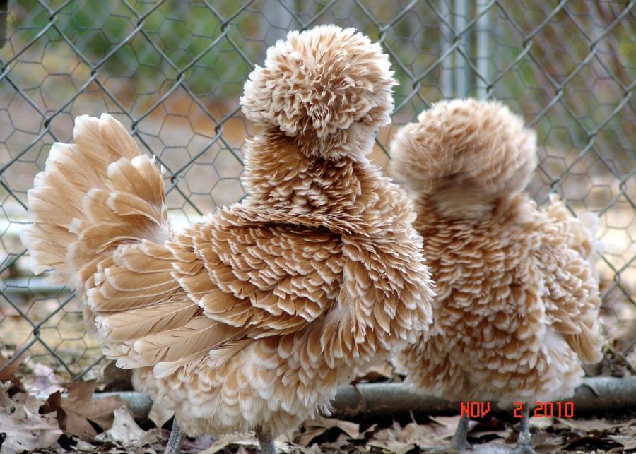 animali-peli-peluria-pelliccia-straordinari-21