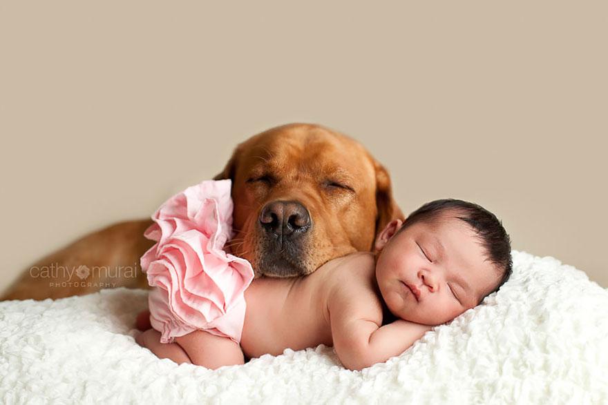 Grandi Cani Che Fanno Da Babysitter Ai Bambini