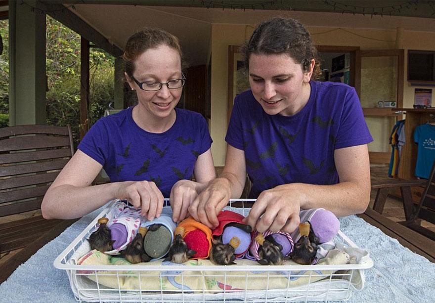 cuccioli-pipistrelli-abbandonati-tolga-bat-hospital-australia-12
