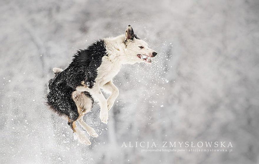 fotografia-cani-alicja-zmyslowska-01