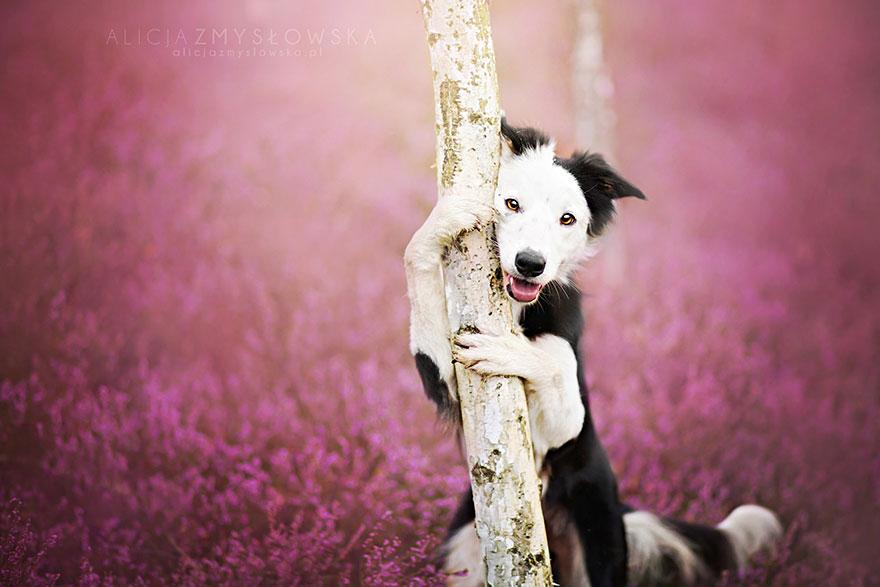 fotografia-cani-alicja-zmyslowska-03