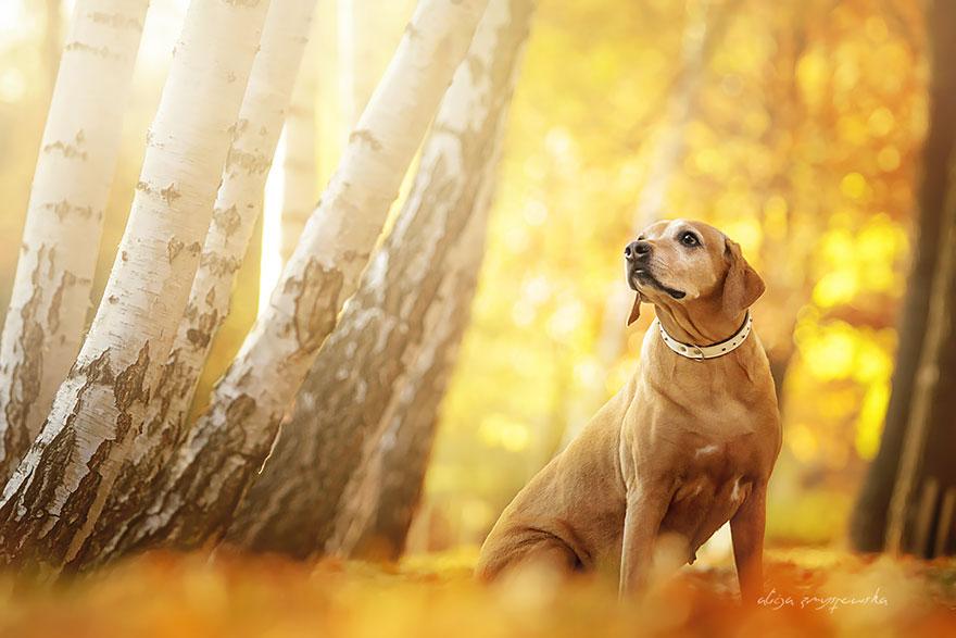 fotografia-cani-alicja-zmyslowska-04