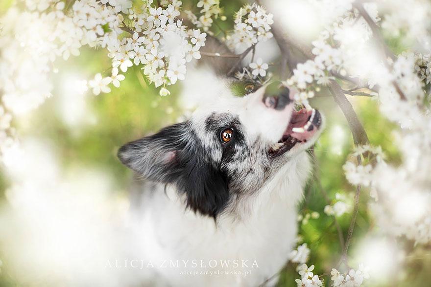 fotografia-cani-alicja-zmyslowska-05