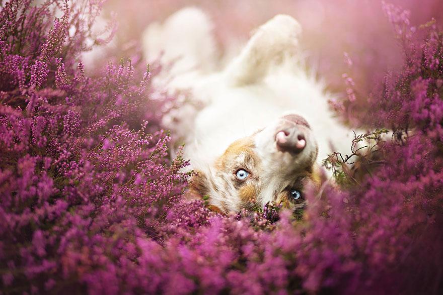 fotografia-cani-alicja-zmyslowska-10