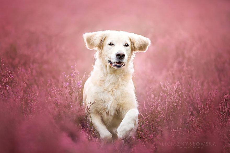 fotografia-cani-alicja-zmyslowska-11
