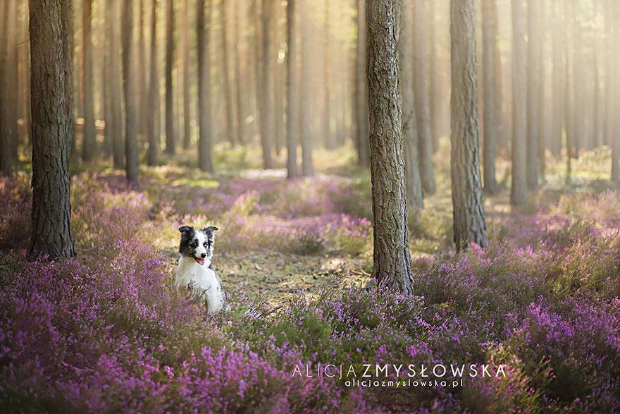 fotografia-cani-alicja-zmyslowska-12