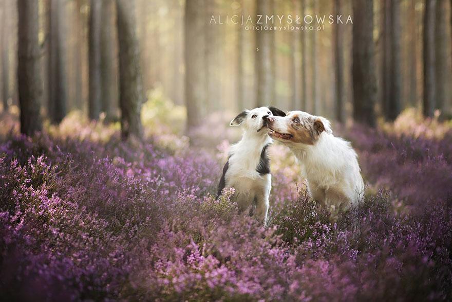 fotografia-cani-alicja-zmyslowska-13
