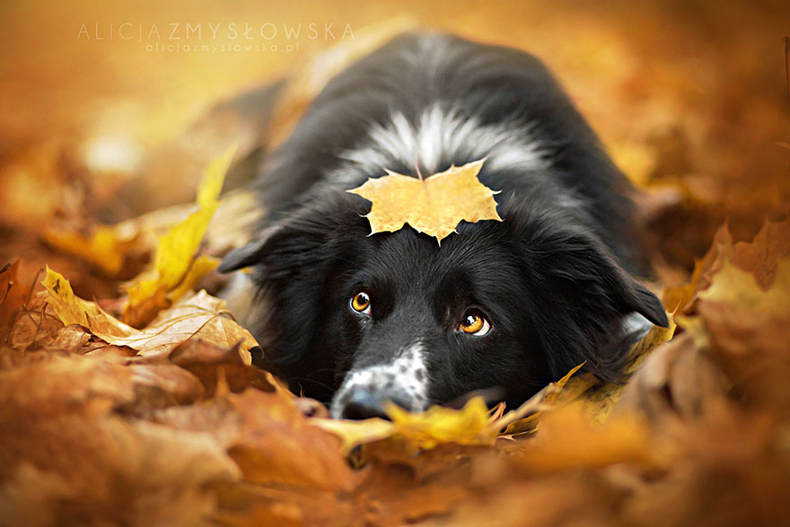 fotografia-cani-alicja-zmyslowska-15