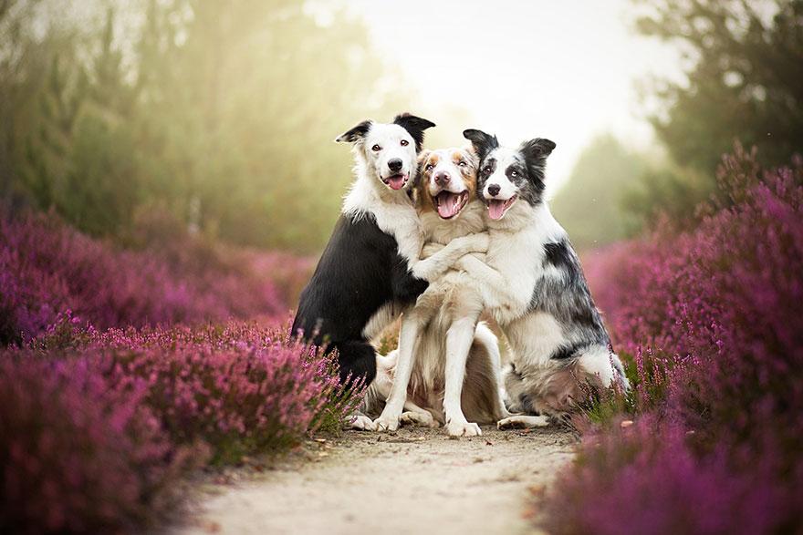 fotografia-cani-alicja-zmyslowska-16