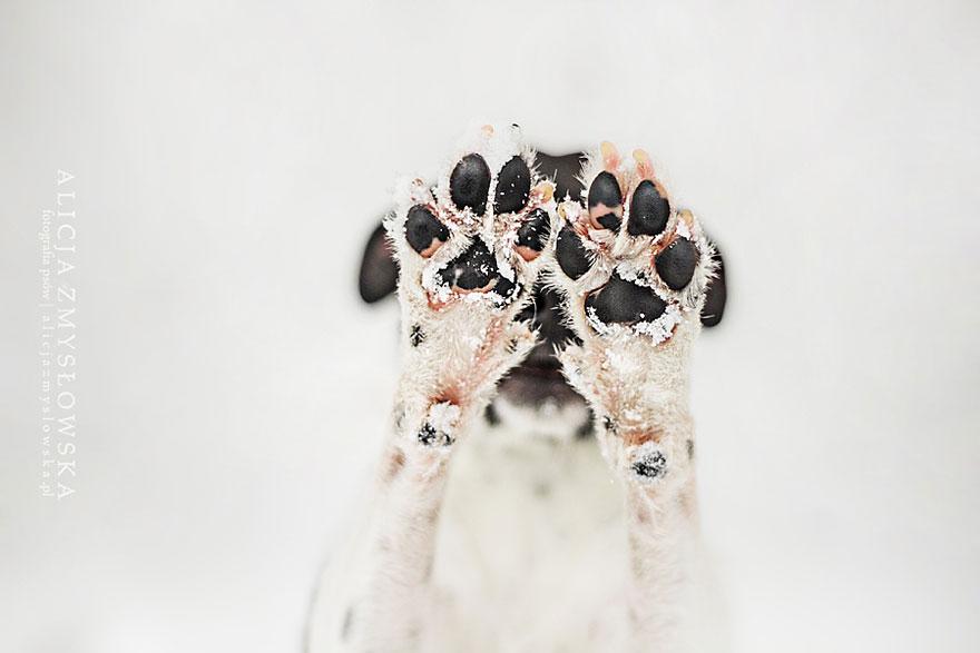 fotografia-cani-alicja-zmyslowska-20
