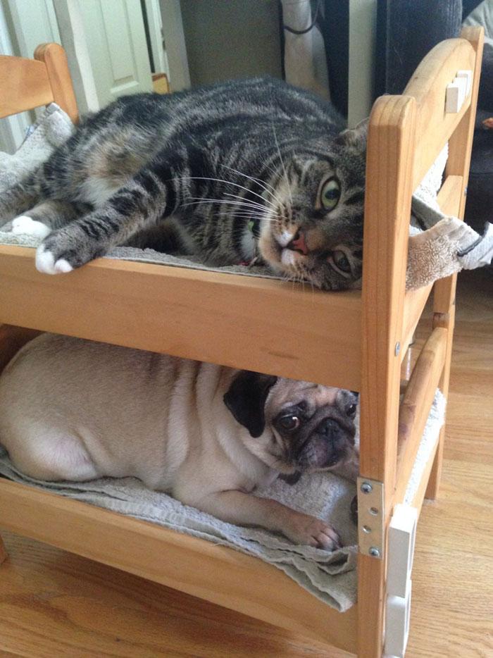 Ikea duktig lettino cuccia per gatti 01 keblog - Cuccia per gatti ikea ...