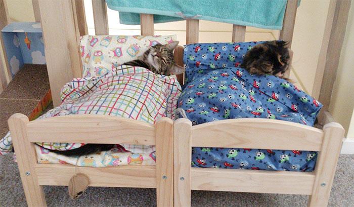 I proprietari di gatti in Giappone usano questi lettini ...