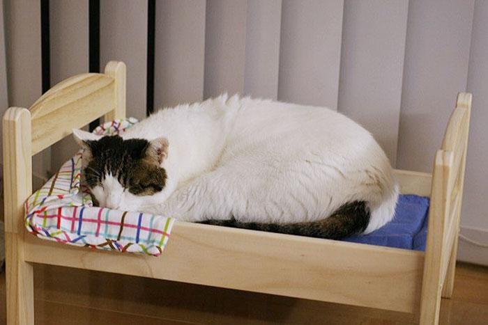 Ikea duktig lettino cuccia per gatti 10 keblog - Cuccia per gatti ikea ...