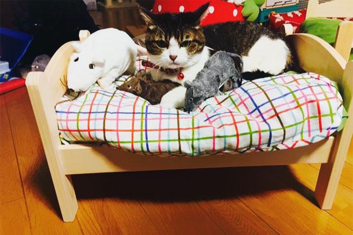 Ikea duktig lettino cuccia per gatti 11 keblog - Cuccia per gatti ikea ...