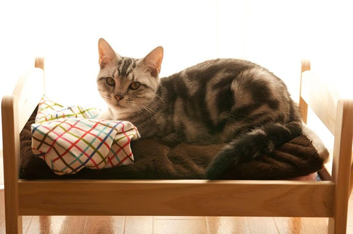 ... gatti in Giappone usano questi lettini per bambole IKEA come cucce per