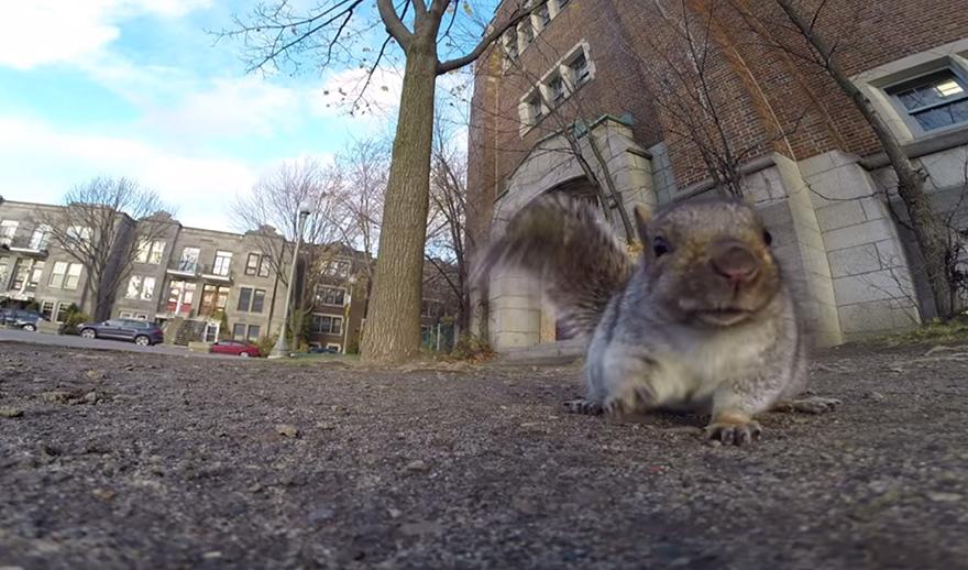 scoiattolo-ruba-videocamera-gopro-1