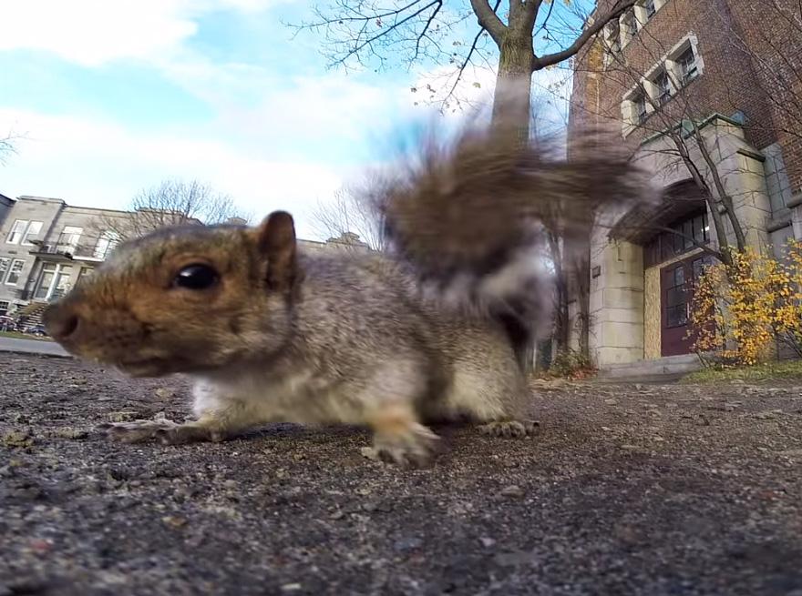 scoiattolo-ruba-videocamera-gopro-2