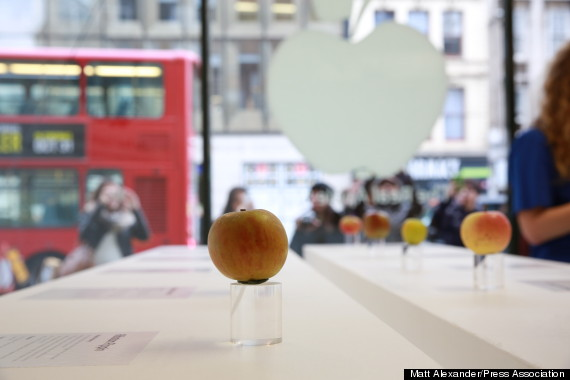 the-real-apple-store-vere-mele-2