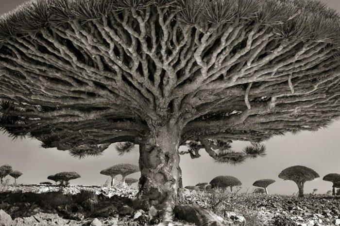 Alberi antichi: Beth Moon trascorre 14 anni a fotografare gli alberi più antichi al mondo