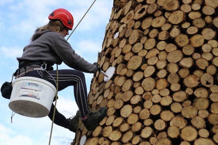 albero-natale-legna-da-ardere-ungheria-4