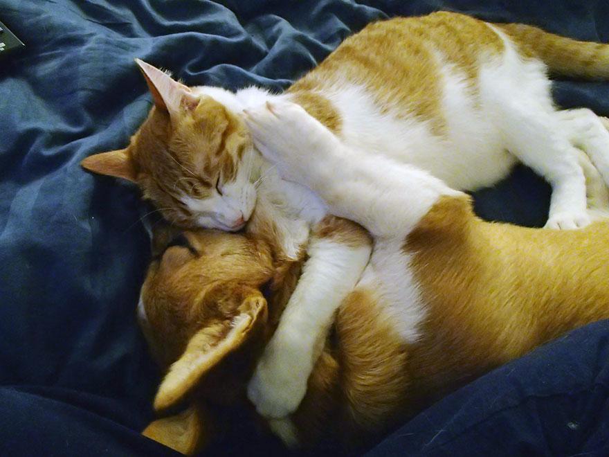 amicizia-tra-cane-e-gatto-2