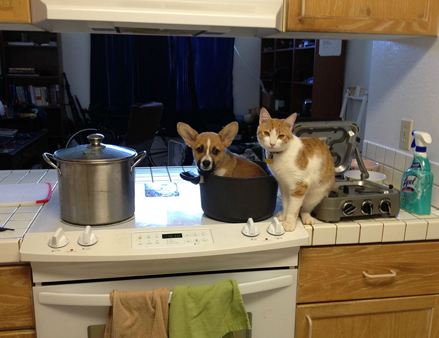 amicizia-tra-cane-e-gatto-3