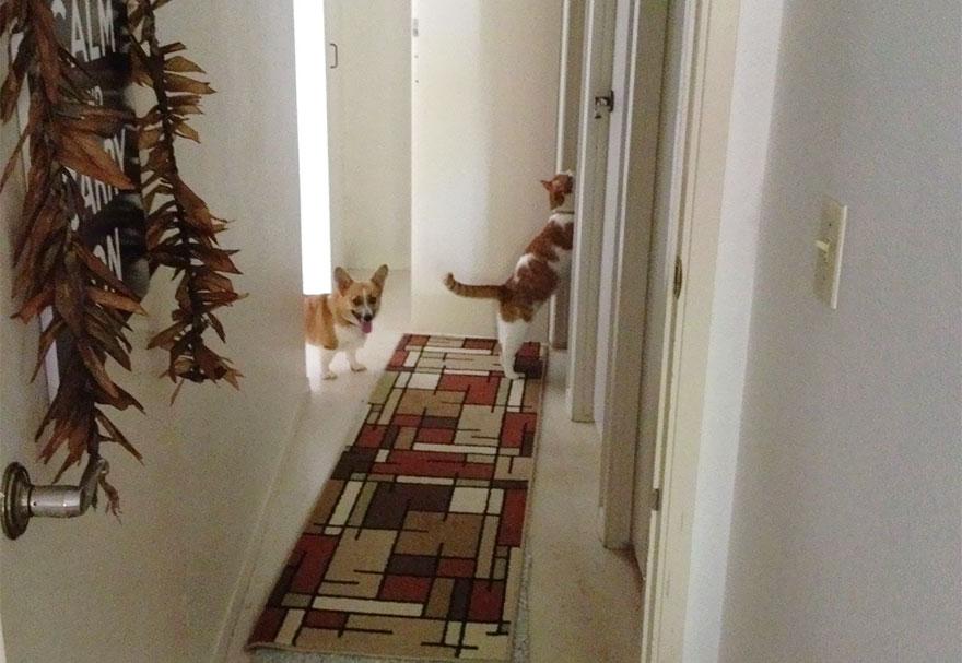 amicizia-tra-cane-e-gatto-8