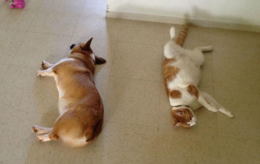 amicizia-tra-cane-e-gatto-9