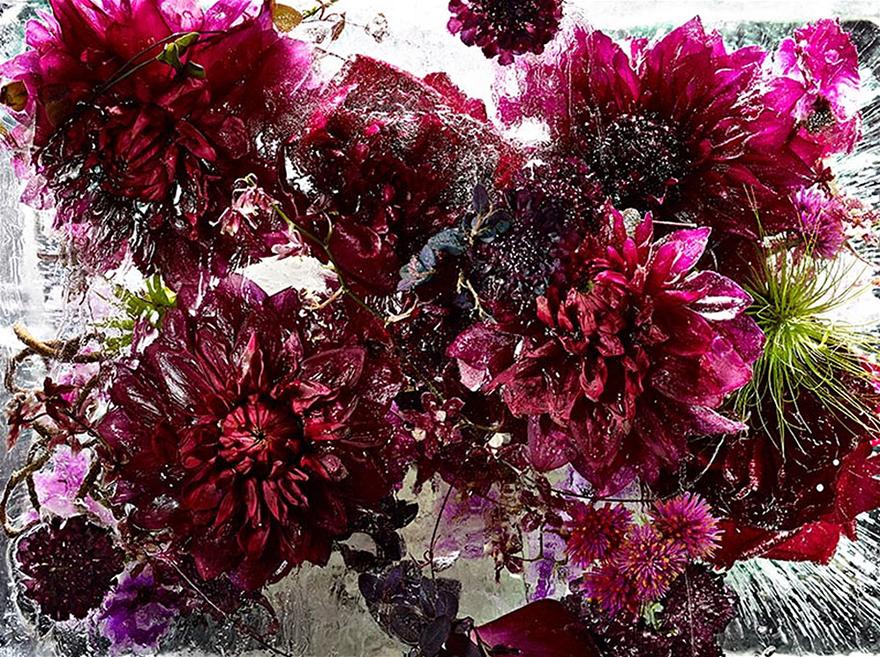fiori-congelati-ghiaccio-kenji-shibata-1