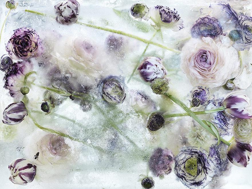 fiori-congelati-ghiaccio-kenji-shibata-3