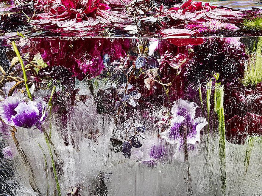 fiori-congelati-ghiaccio-kenji-shibata-4