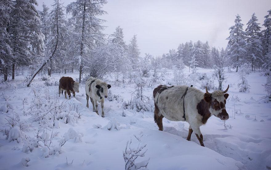 il-paese-più-freddo-del-mondo-ojmjakon-russia-08