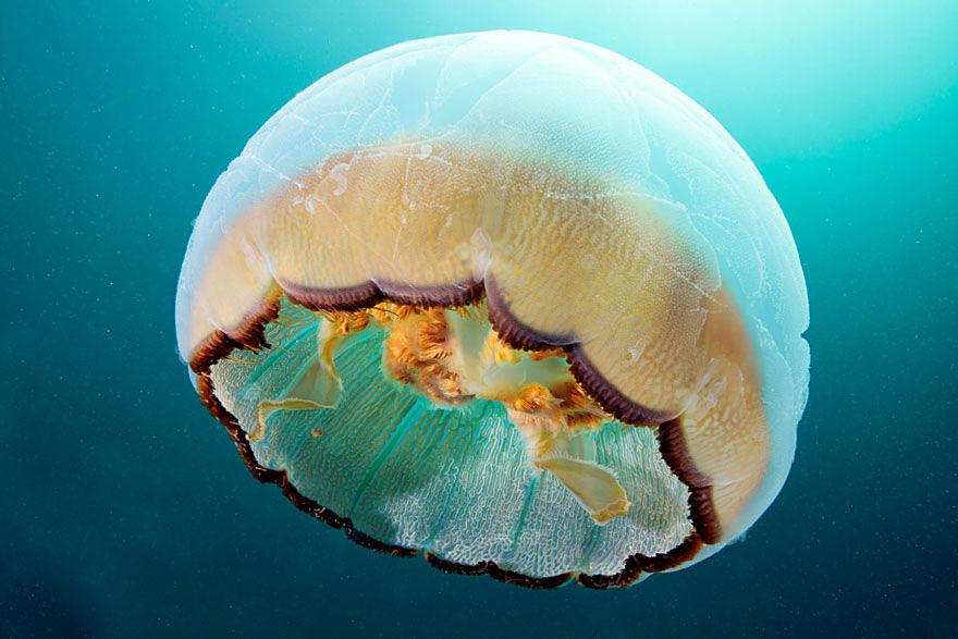 meduse-fotografia-abissi-alexander-semenov-aquatis-08
