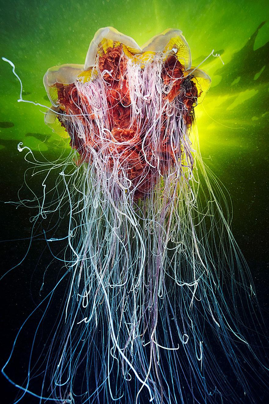 meduse-fotografia-abissi-alexander-semenov-aquatis-12