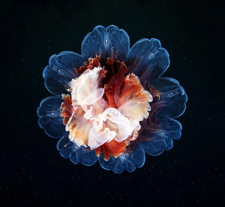 meduse-fotografia-abissi-alexander-semenov-aquatis-17