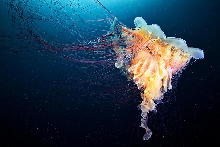 meduse-fotografia-abissi-alexander-semenov-aquatis-18