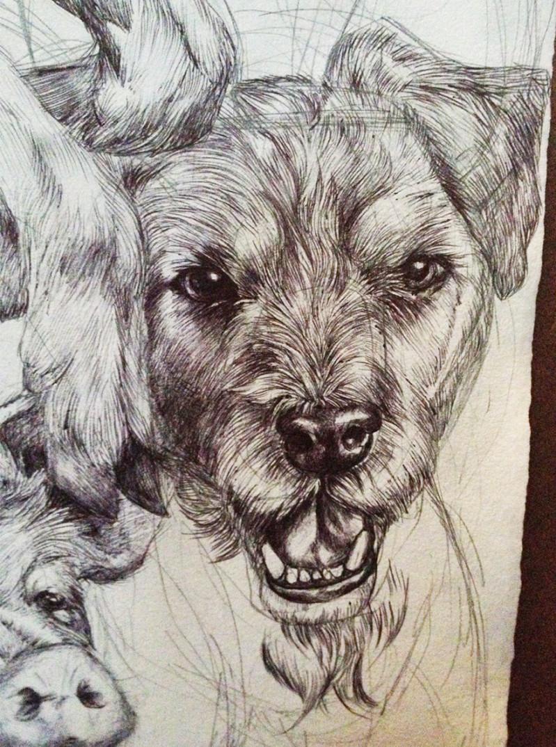 oroscopo-cinese-animali-disegno-casterlyrock-Savannah-Burgess-09