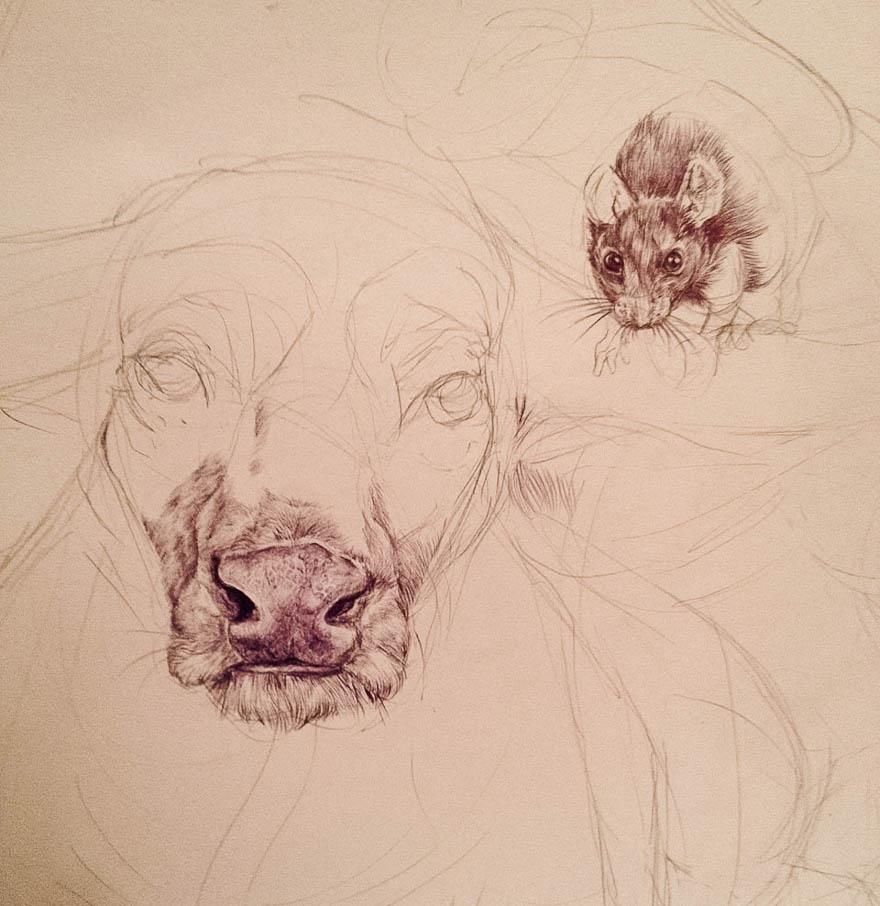 oroscopo-cinese-animali-disegno-casterlyrock-Savannah-Burgess-11