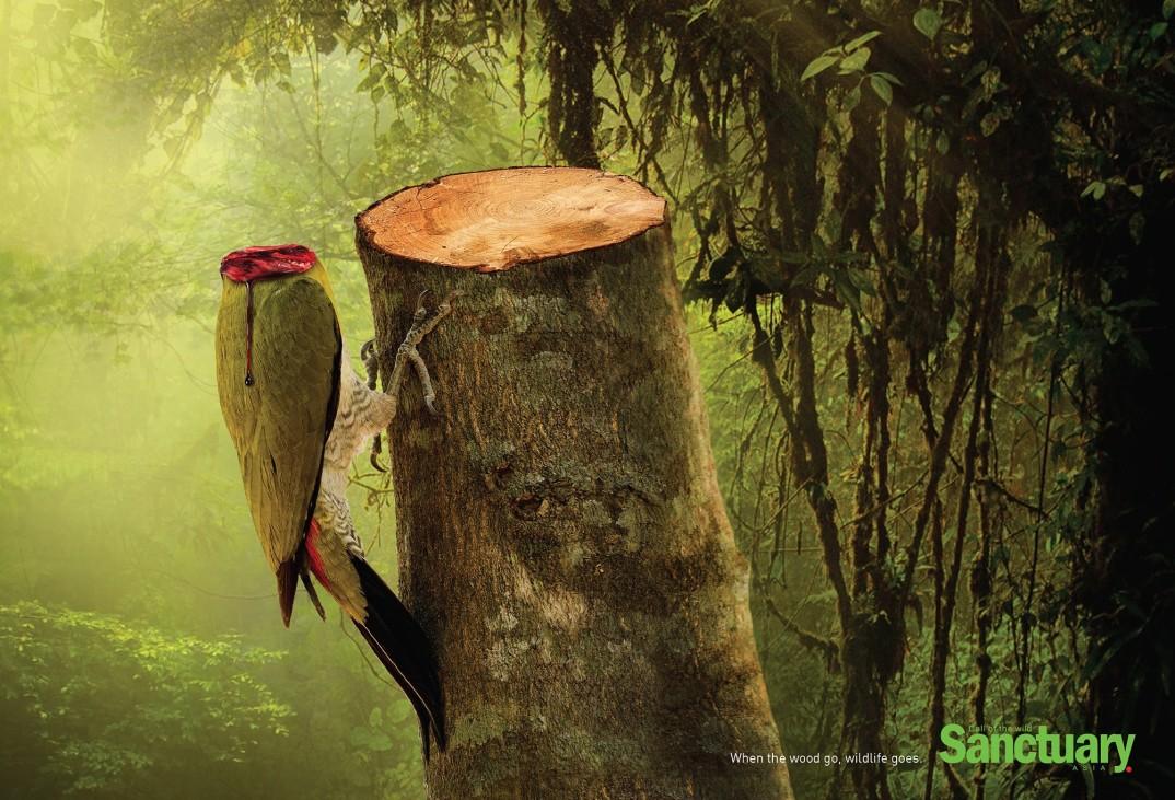 pubblicità-deforestazione-animali-sanctuary-asia-adeeve-1